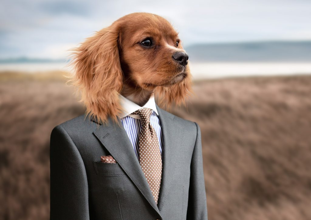 dog in suit - facebook ads for small business